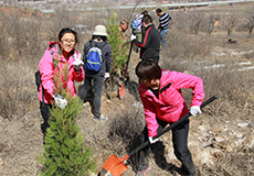 Tree Planting Activities in Beijing