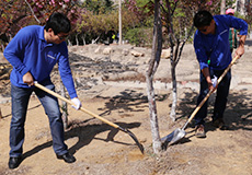 Tree Planting Activities in Dalian